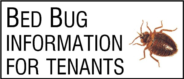 Bed Bug link image